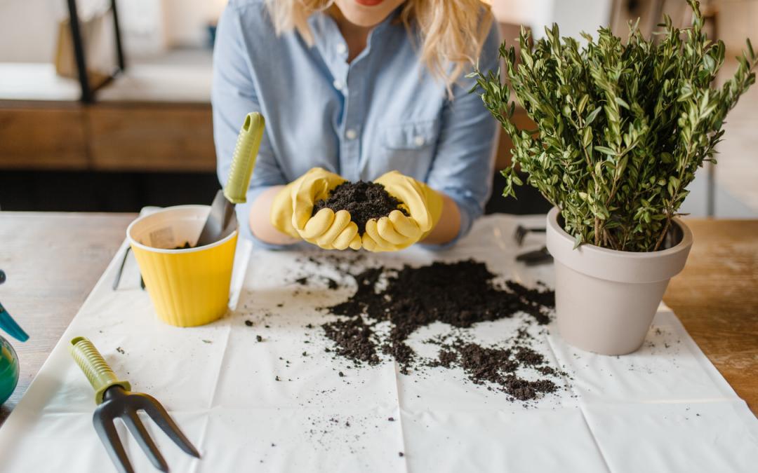 jardines en casa